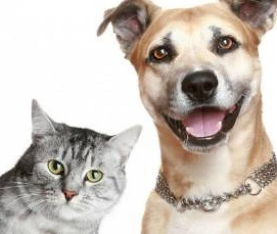 Imagem retirada de http://sertaozinho.sp.gov.br/conteudo/programa-de-castracao-debaixo-custo-e-sem-custo-beneficiou5500-animais-nos-ultimos-quatro-anos.html#.WMls1_ISMjI
