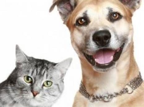 """Programa de Castração de """"Baixo Custo e Sem Custo"""" beneficiou 5.500 animais nos últimos quatro anos"""