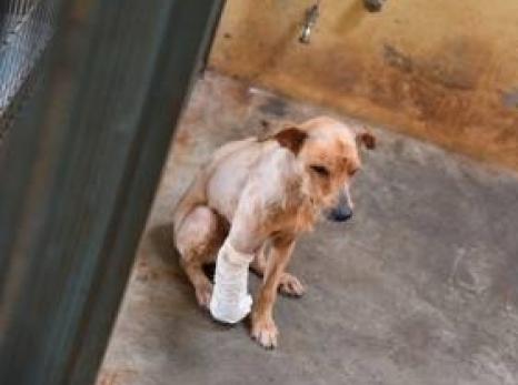Canil Municipal de Sertãozinho é sinônimo de proteção animal