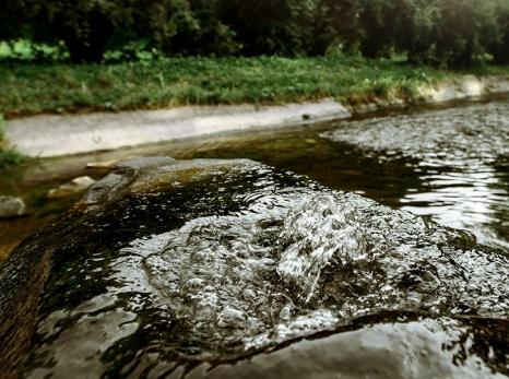 Meio ambiente: saiba quais são as demandas e o que pretendem os candidatos de Goiânia