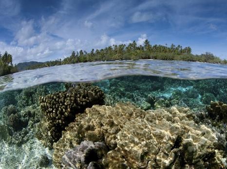 98% dos brasileiros se dizem preocupados com meio ambiente, aponta estudo